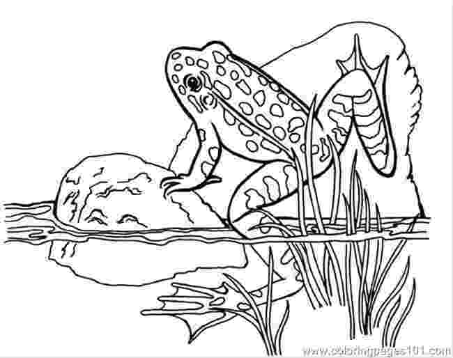 amphibian coloring pages coloring pages leo amphibians gt frog free printable pages coloring amphibian