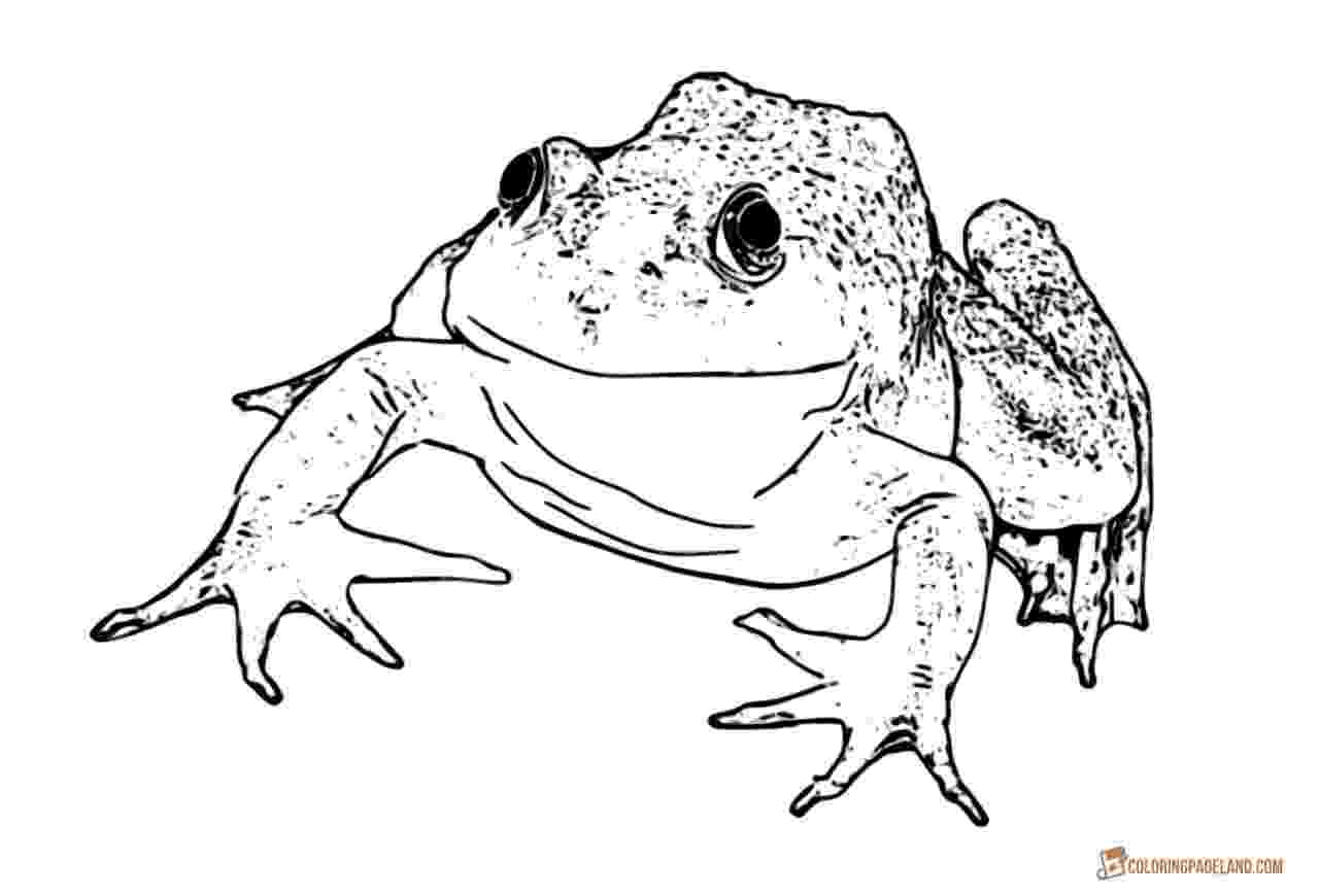 amphibian coloring pages frog tree amphibian coloring page wecoloringpagecom coloring amphibian pages