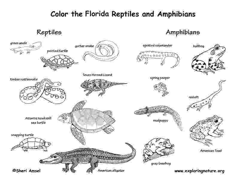 amphibian coloring pages reptile coloring pages coloring pages pages amphibian coloring