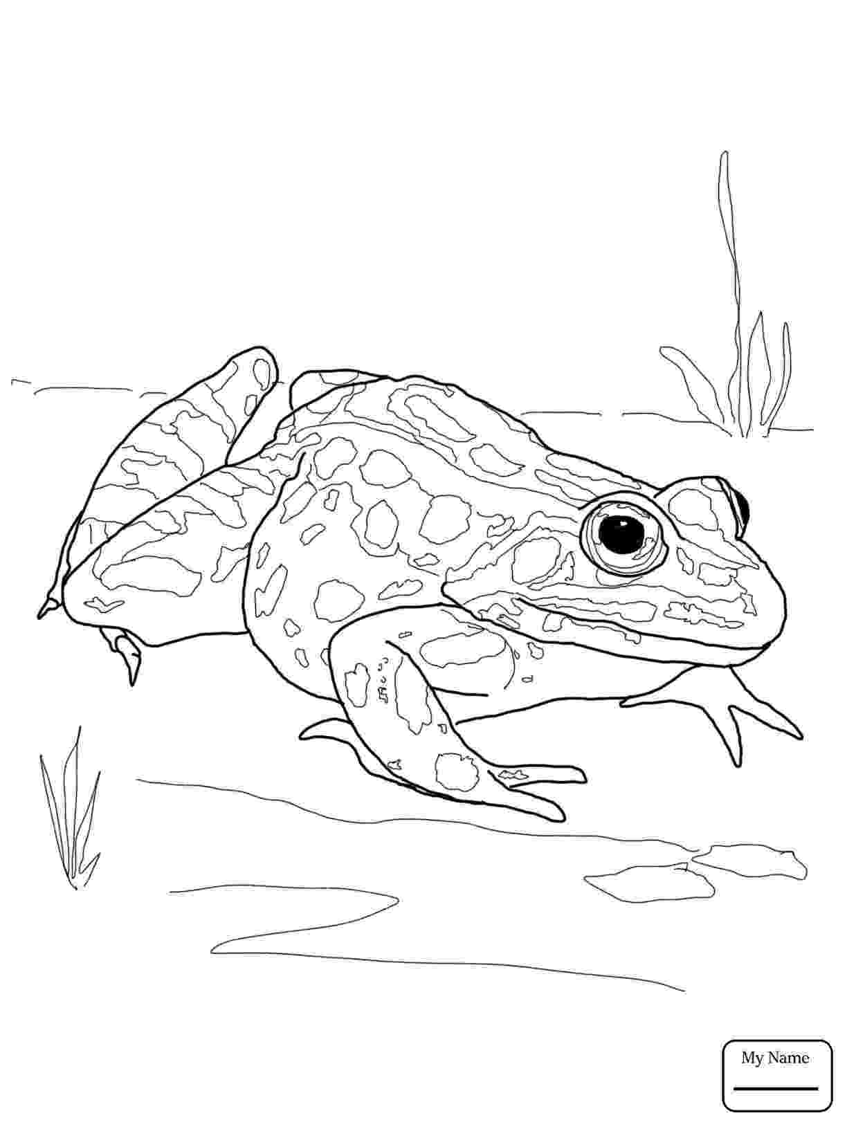amphibian coloring pages reptile coloring pages to download and print for free amphibian pages coloring