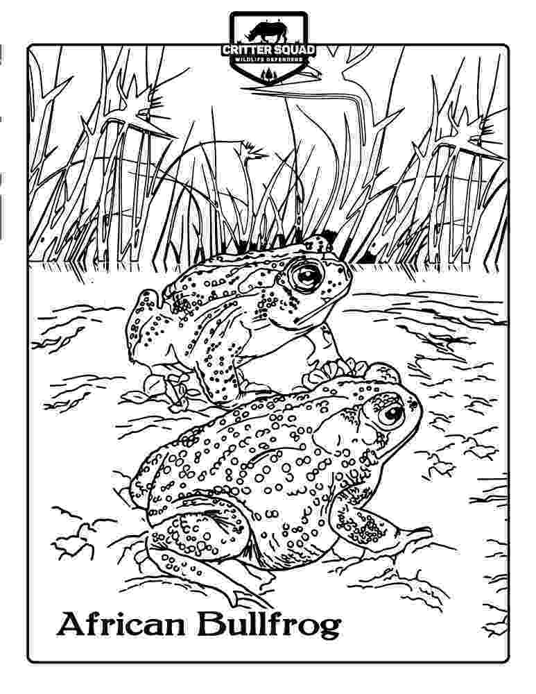 amphibian coloring pages what is a reptile printable reptile book by twistynoodle pages amphibian coloring