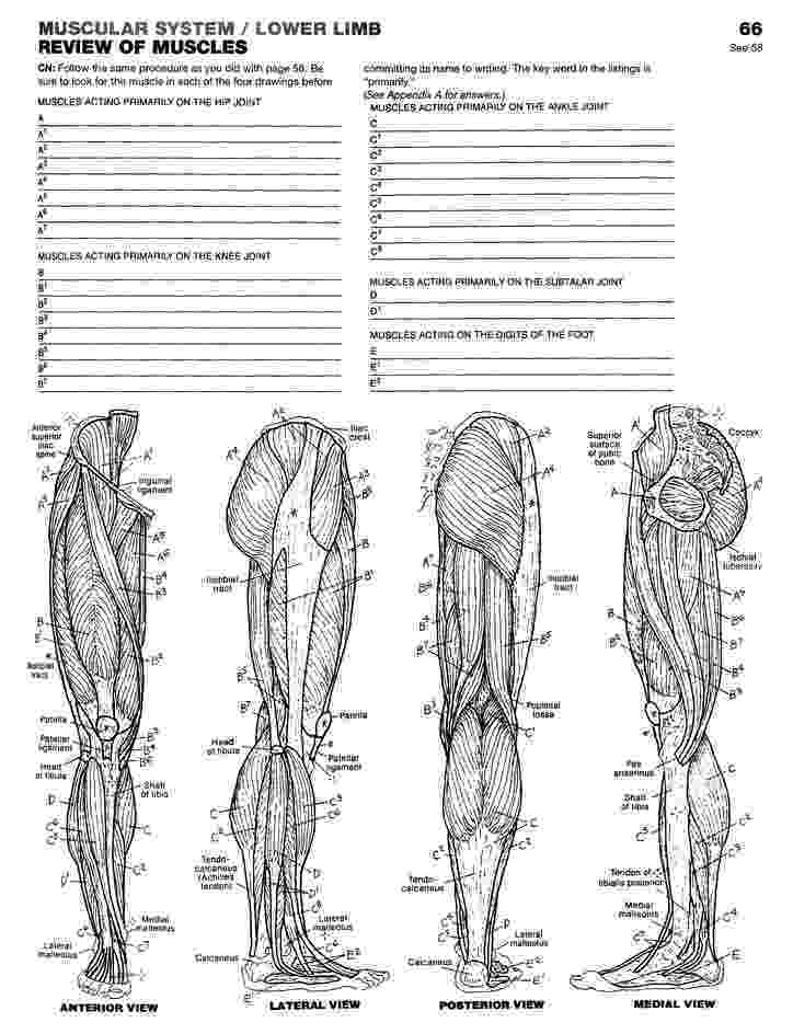 anatomy coloring book 4th edition doctor mario39s anatomy coloring book page 3 by edition coloring anatomy 4th book