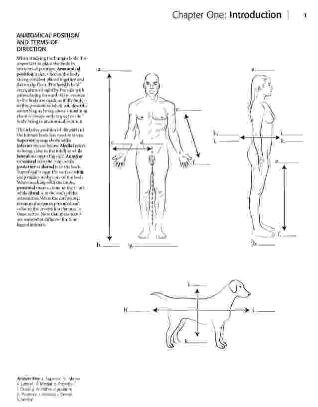 anatomy coloring book 4th edition human body coloring book assistant blurred silhouette half coloring edition anatomy 4th book