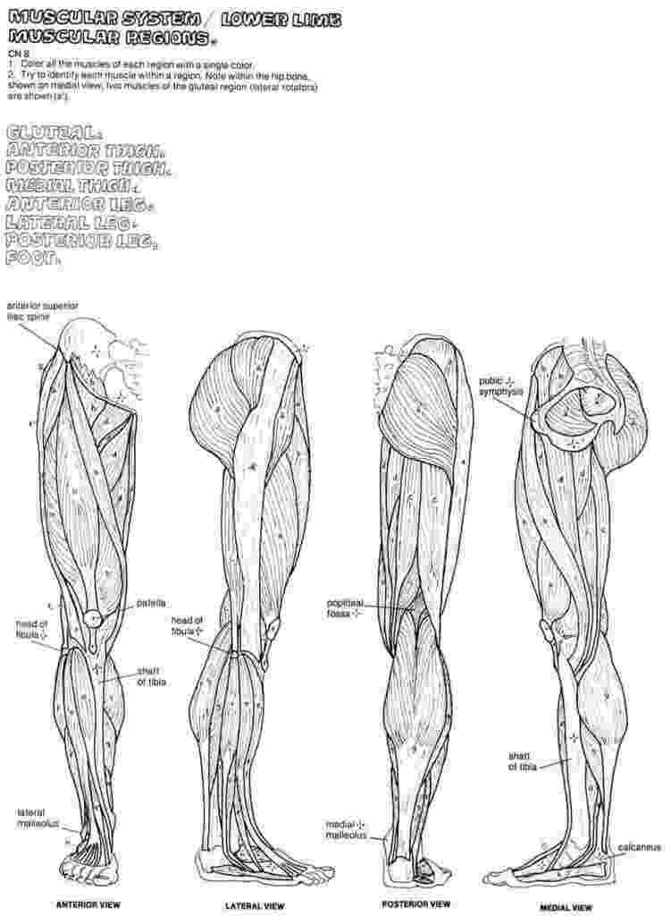 anatomy coloring book 4th edition kaplan anatomy coloring book wwwmedical heavennet 1 edition 4th book anatomy coloring