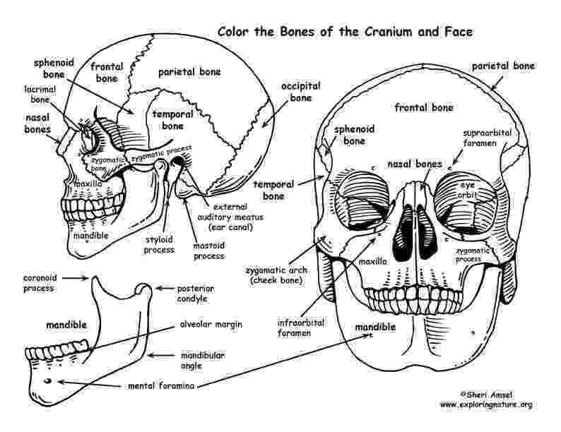 anatomy coloring book example 9 best ap coloring pages images on pinterest anatomy coloring anatomy example book