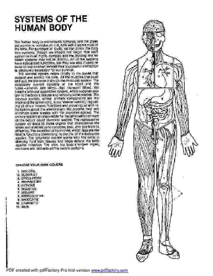 anatomy coloring book example anatomy and physiology coloring pages anatomy and example coloring anatomy book