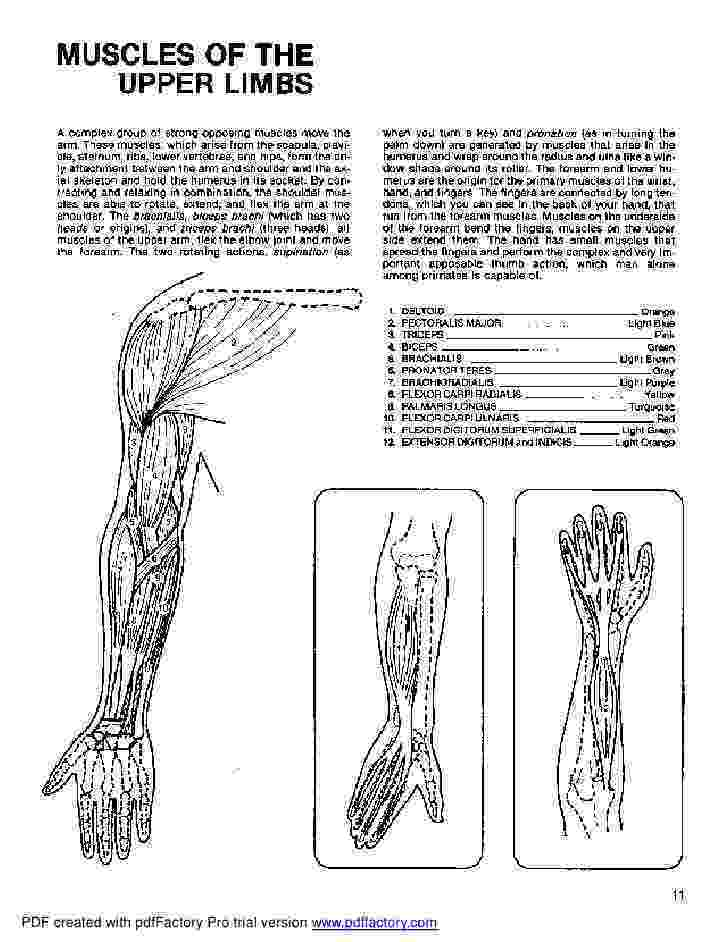 anatomy coloring book example anatomy coloring book dover book anatomy coloring example
