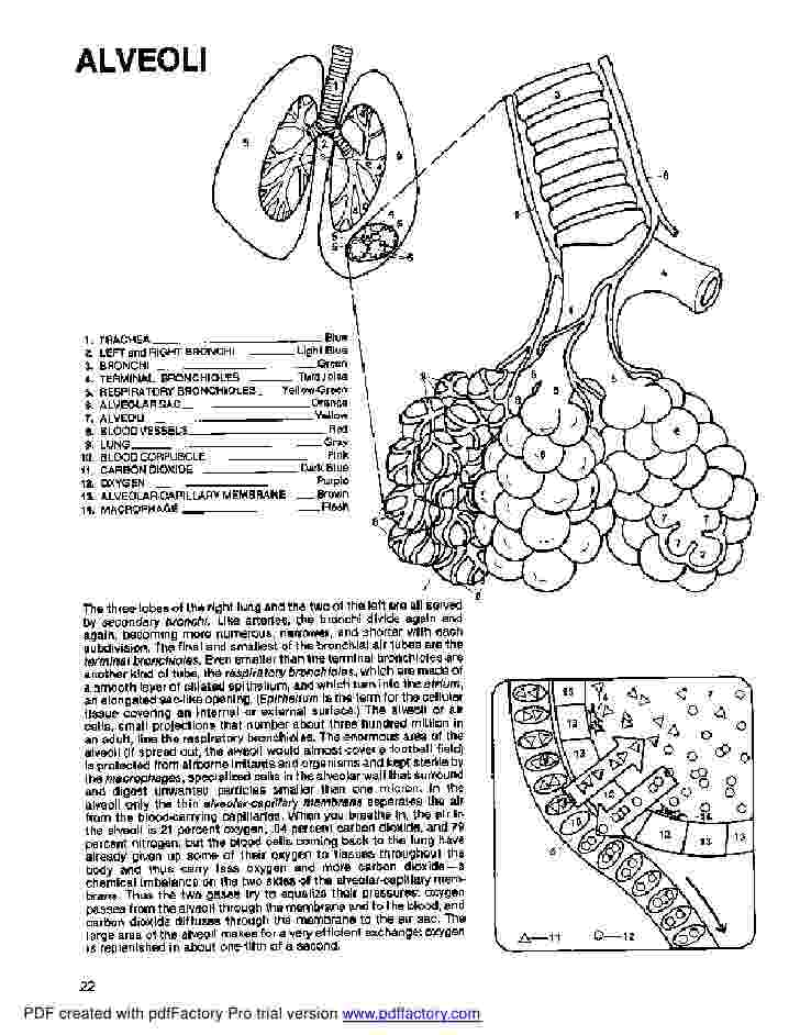 anatomy coloring book example anatomy coloring book dover book anatomy example coloring