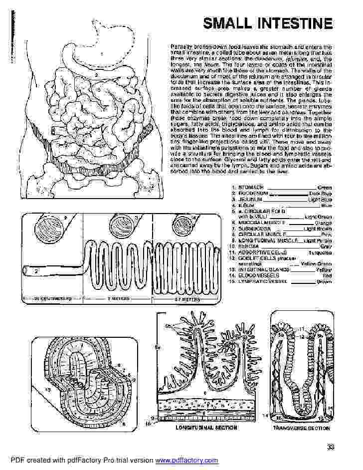 anatomy coloring book example anatomy coloring pages heart coloring home coloring anatomy example book