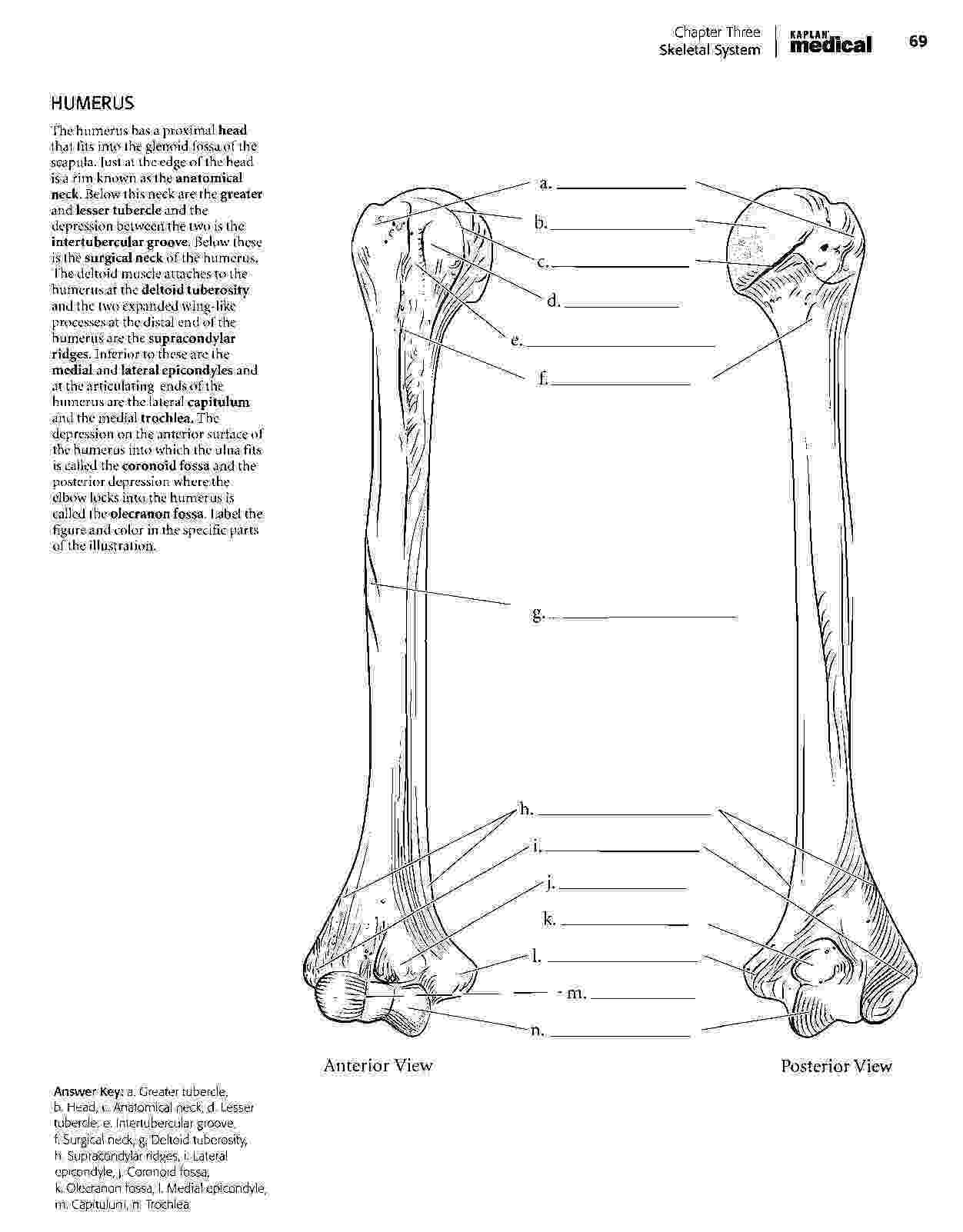anatomy coloring book free free printable human anatomy coloring pages 2 free coloring free book anatomy