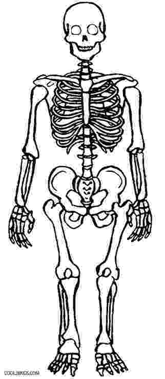 anatomy coloring pages free free anatomy and physiology coloring pages coloring home coloring free pages anatomy