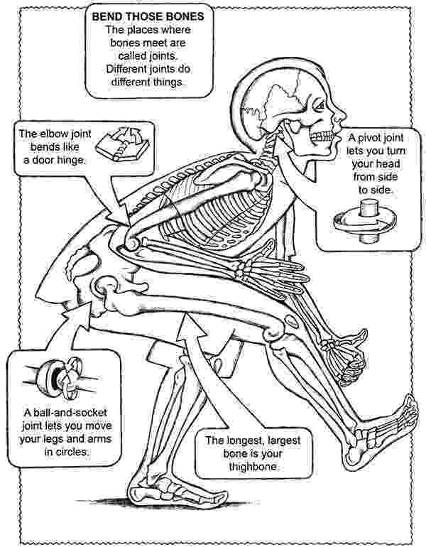 anatomy coloring pages free respiratory system coloring page homeschool anatomy pages free anatomy coloring