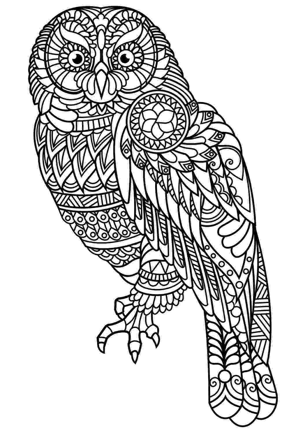 animal coloring book for adults animal coloring pages pdf owl coloring pages bird coloring book for adults animal