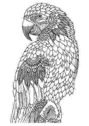 animal coloring book for adults illustration by keiti free printable coloring page animal book for coloring adults