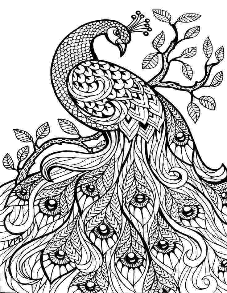 animal coloring book for adults pin em adult coloring book animals book for animal coloring adults