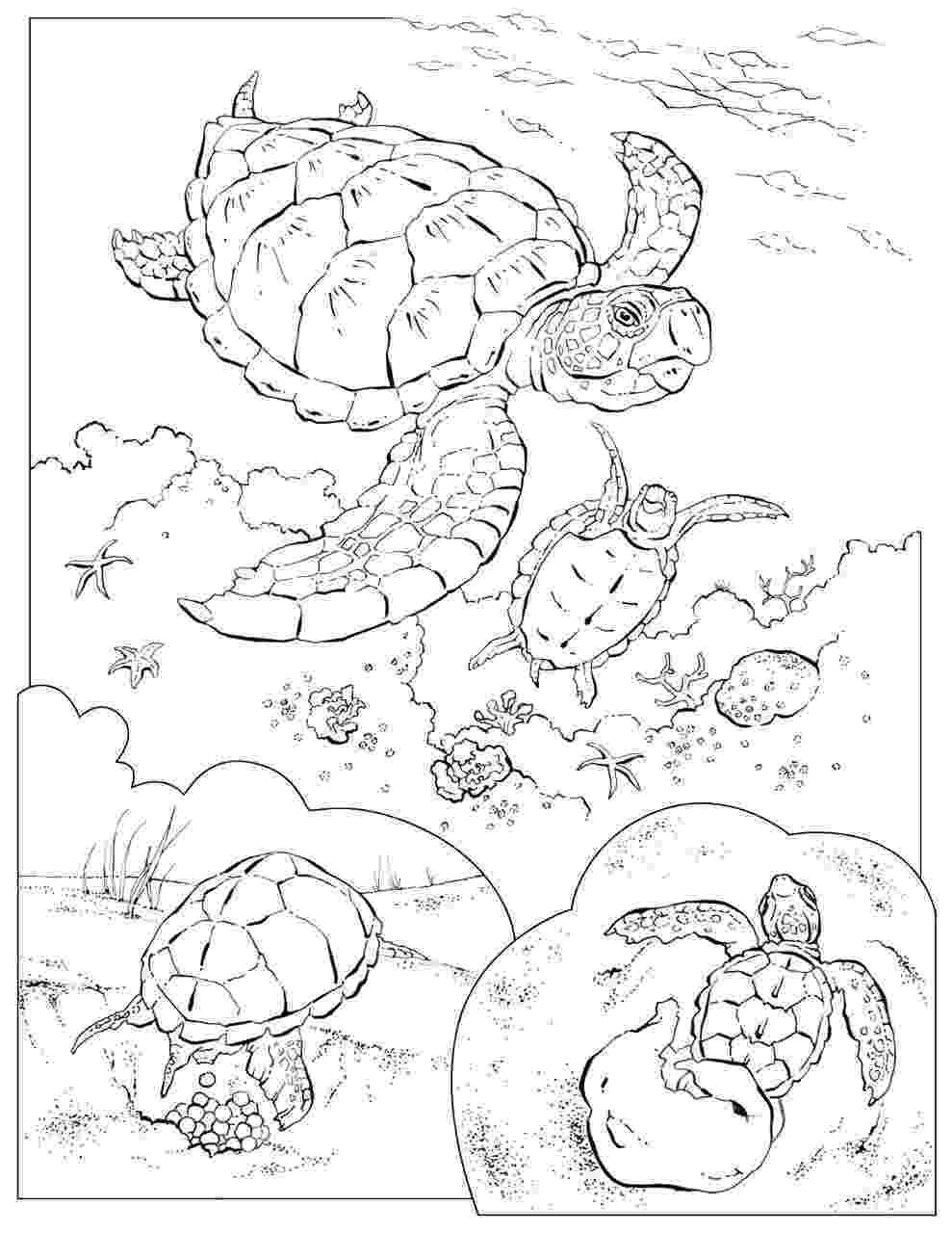 animal coloring pages national geographic coloring book animals a to i doodles penguin pages national coloring geographic animal