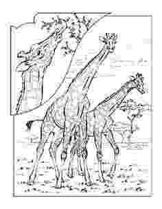 animal coloring pages national geographic coloring book animals j to z geographic coloring national pages animal