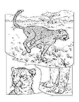 animal coloring pages national geographic coloring book animals j to z science coloring animal pages geographic national