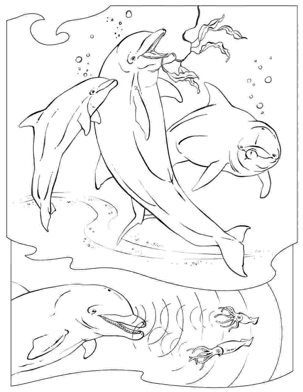 animal coloring pages national geographic coloring pages wildlife research conservation geographic pages national coloring animal