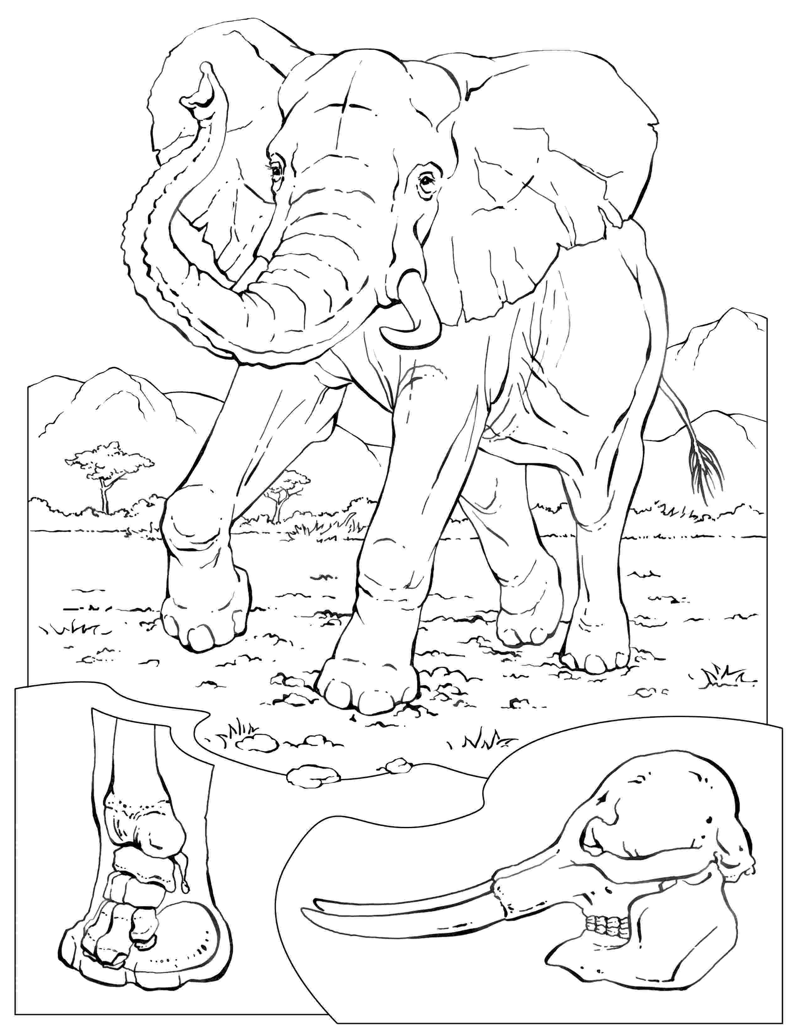 animal coloring pages national geographic national geographic coloring fish coloring pages animal national pages coloring geographic