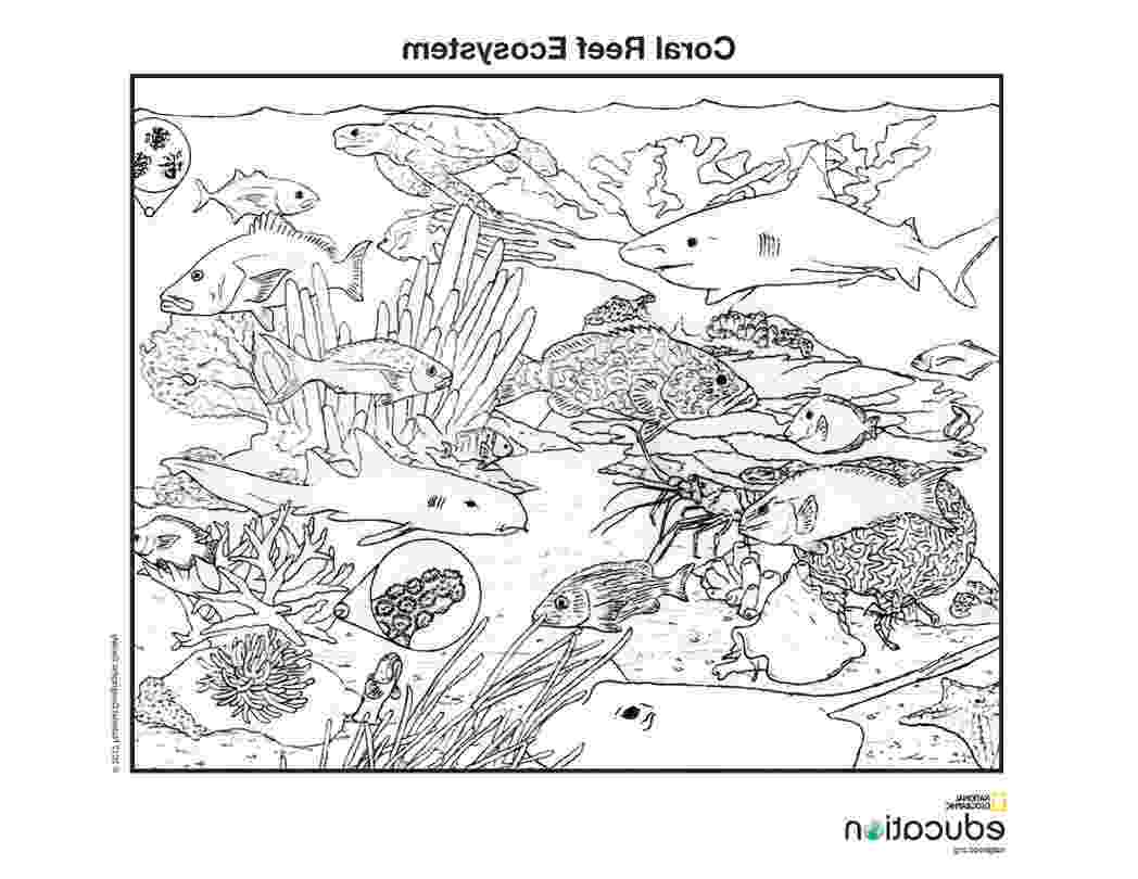 animal coloring pages national geographic national geographic coloring pages coloring home animal coloring national geographic pages