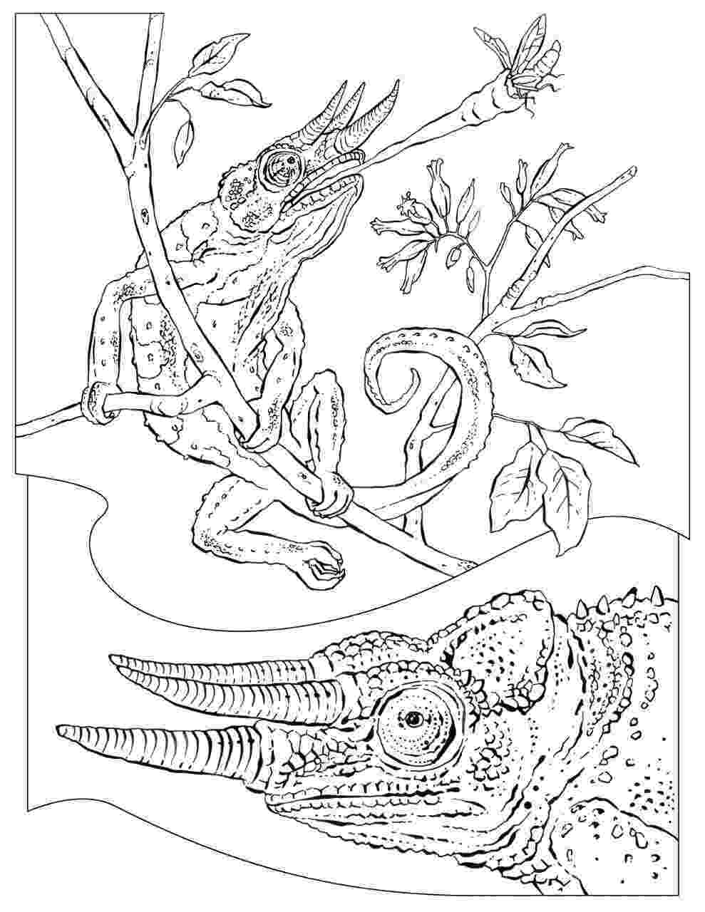 animal coloring pages national geographic national geographic coloring pages coloring home geographic pages coloring national animal