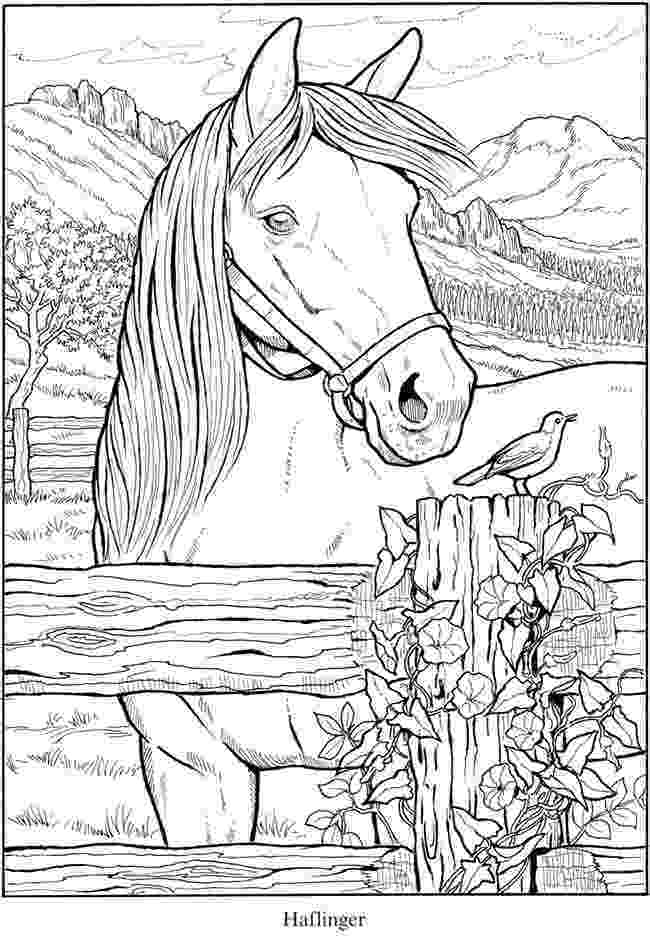 animal colouring pages for older children pin by jenny culligan on line39s horse coloring pages pages animal children older for colouring