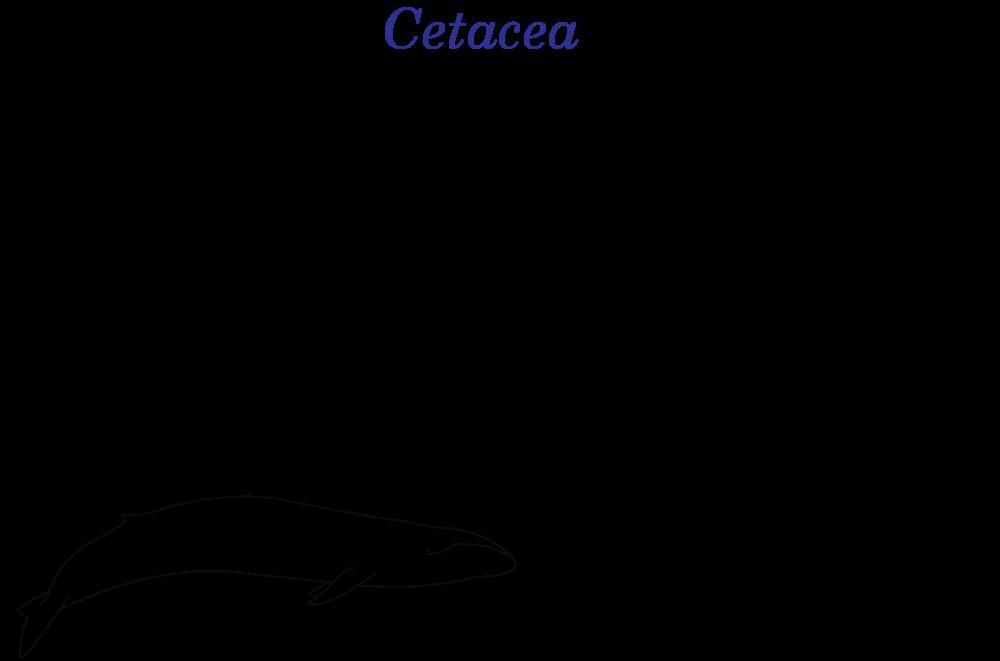 animal kingdom coloring book whale printable baby whale image free whale coloring pages whale coloring kingdom animal book