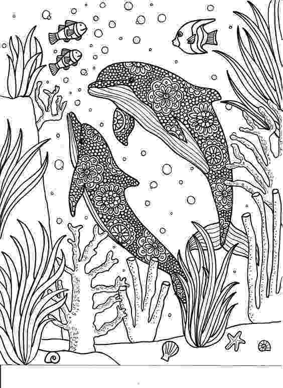 animal kingdom coloring book whale whale anatomy mammals mammals anatomy anatomy kingdom animal coloring book whale