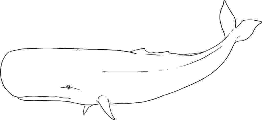 animal kingdom coloring book whale whale coloring page whale coloring pages coloring pages coloring animal book kingdom whale