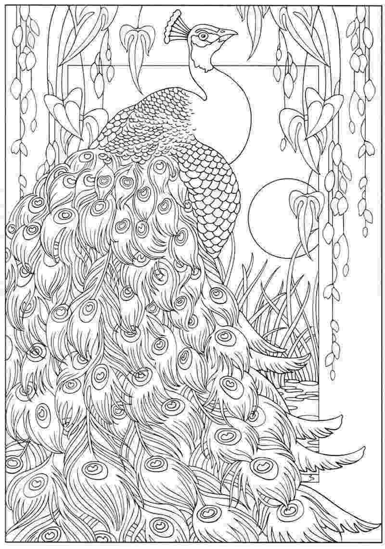animal kingdom colouring book peacock animal kingdom color me draw me millie marotta animal colouring kingdom peacock book