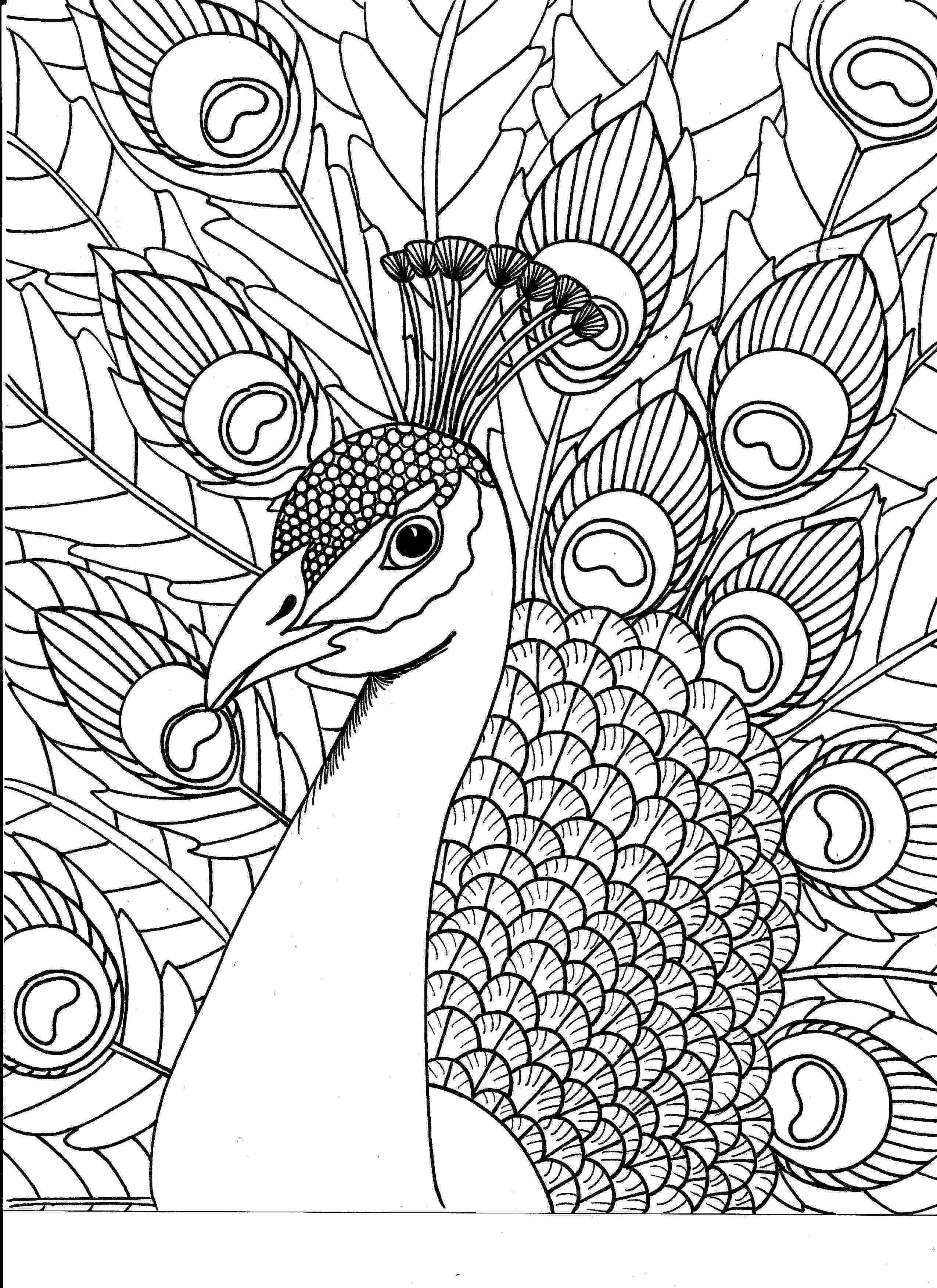 animal kingdom colouring book peacock beautiful peacock adult colouring adult colouring kingdom peacock colouring book animal