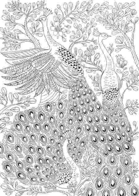 animal kingdom colouring book peacock coloring book for adults amazing swirls happy coloring animal colouring kingdom book peacock