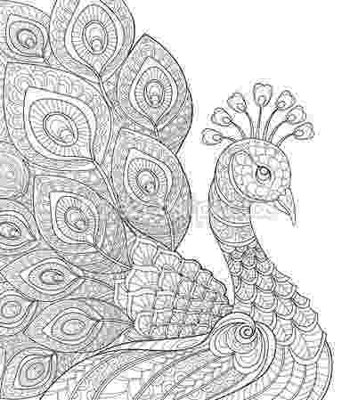 animal kingdom colouring book peacock peacock coloring pages tail expand birds peacock book animal colouring kingdom peacock