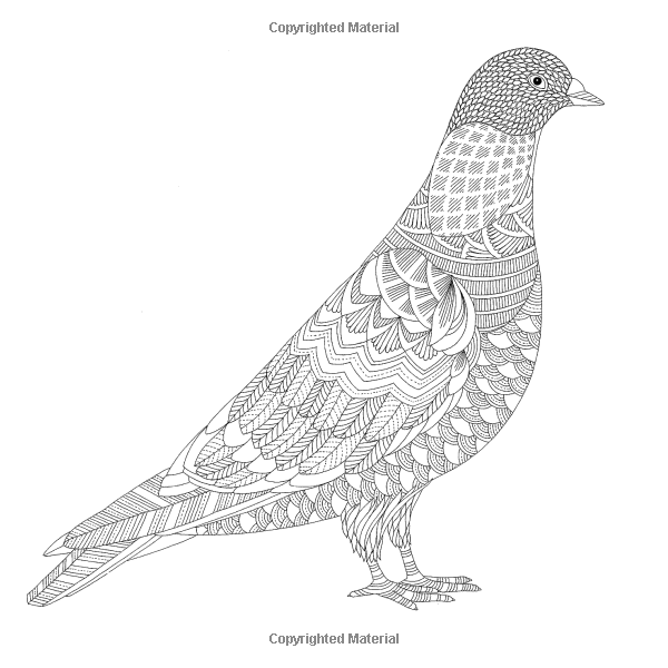 animal kingdom millie colouring book 1000 images about free adult colouring pages on pinterest kingdom animal book colouring millie