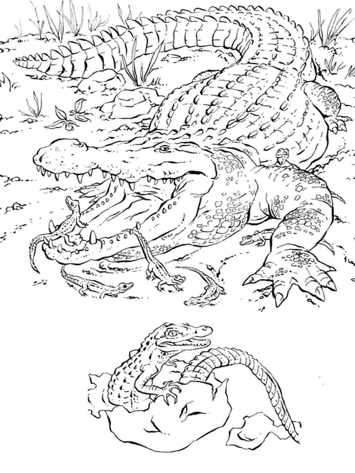 animal pictures coloring pages animal coloring pages horse coloring page pages animal pictures coloring