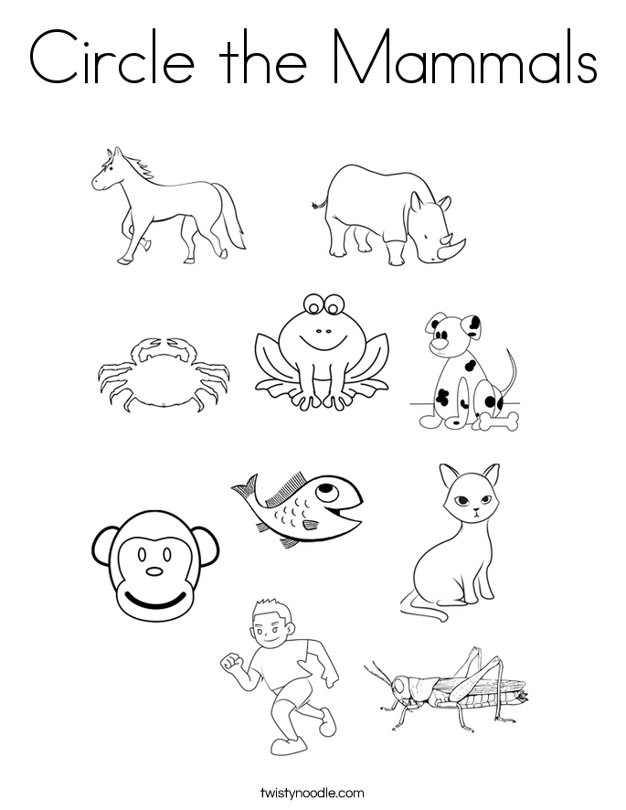 animals coloring worksheets for kindergarten circle the mammals coloring page twisty noodle coloring worksheets for kindergarten animals