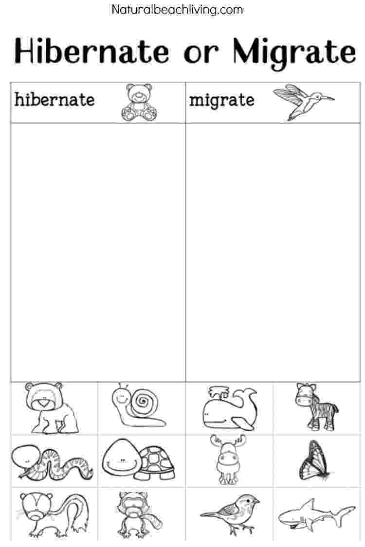 animals coloring worksheets for kindergarten winter animals for preschool activities natural beach living animals kindergarten worksheets coloring for