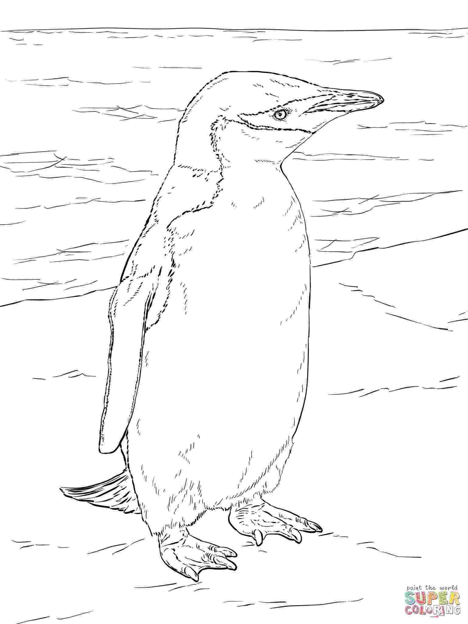 antarctica coloring page antarctica coloring page at getcoloringscom free coloring antarctica page