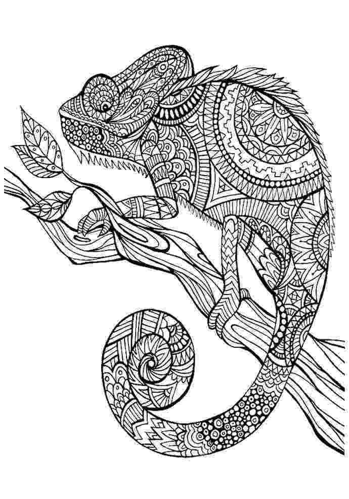 anti stress coloring book animals animal mandala chameleon coloring pages as anti stress stress book animals coloring anti