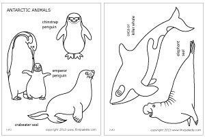 arctic animals coloring pages for preschoolers 12 best preschool images north pole animals polar pages coloring arctic preschoolers animals for