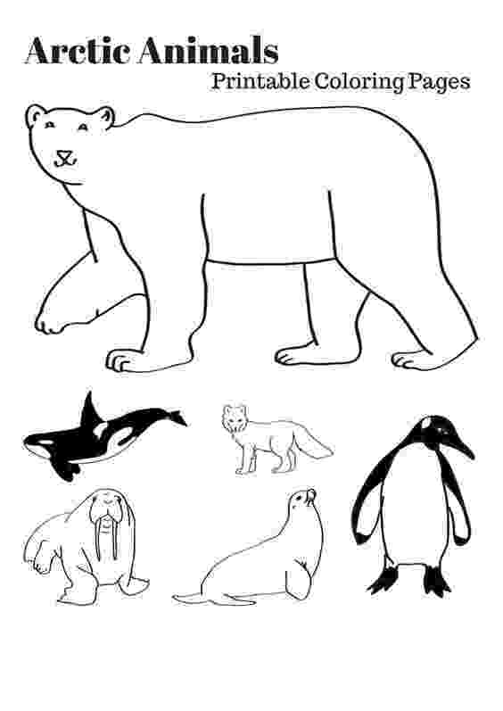 arctic animals coloring pages for preschoolers arctic animals song for children preschoolers for arctic coloring pages animals