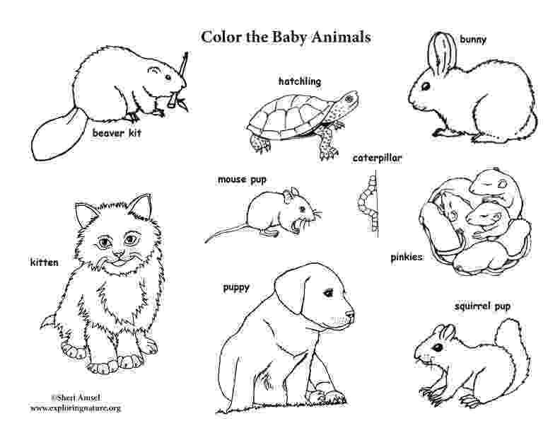 baby animal coloring page baby animals coloring pages getcoloringpagescom page animal coloring baby