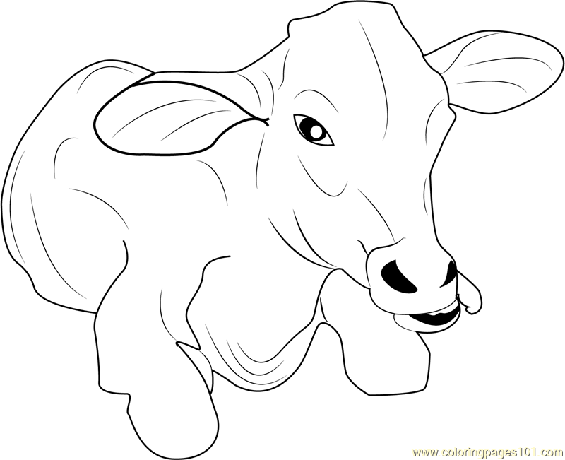 baby cow coloring pages baby cow coloring page free cow coloring pages cow baby coloring pages cow