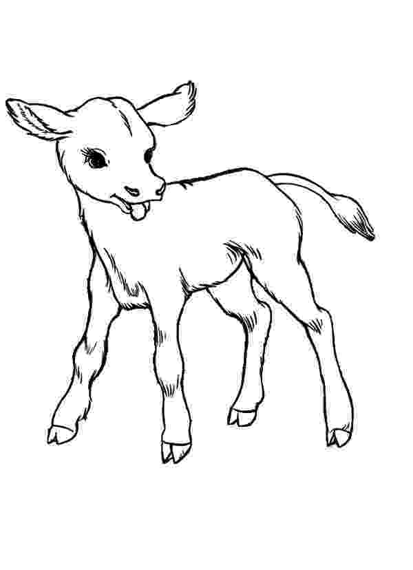 baby cow coloring pages baby cows coloring pages kids play color cow coloring baby pages