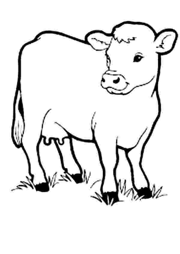 baby cow coloring pages coloring pages of baby cows coloring page after school pages baby coloring cow