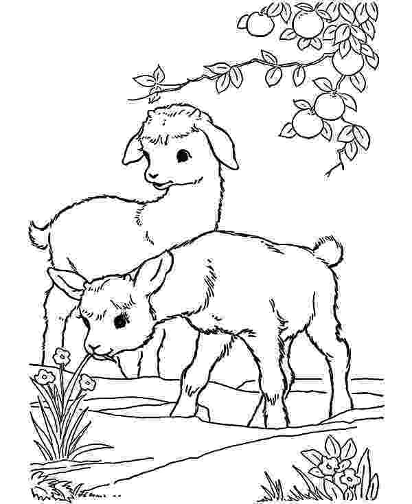 baby goat coloring pages baby goat playing under orange tree coloring pages color goat coloring baby pages