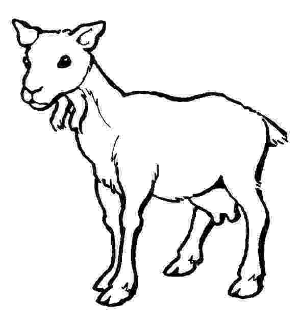 baby goat coloring pages free cute goat coloring pages coloring pages baby goat