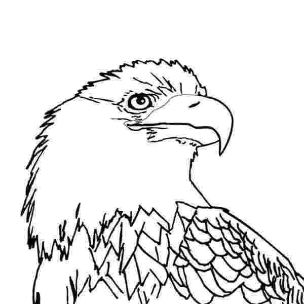 bald eagle pictures to color bald eagle coloring page animals town animals color pictures color to bald eagle