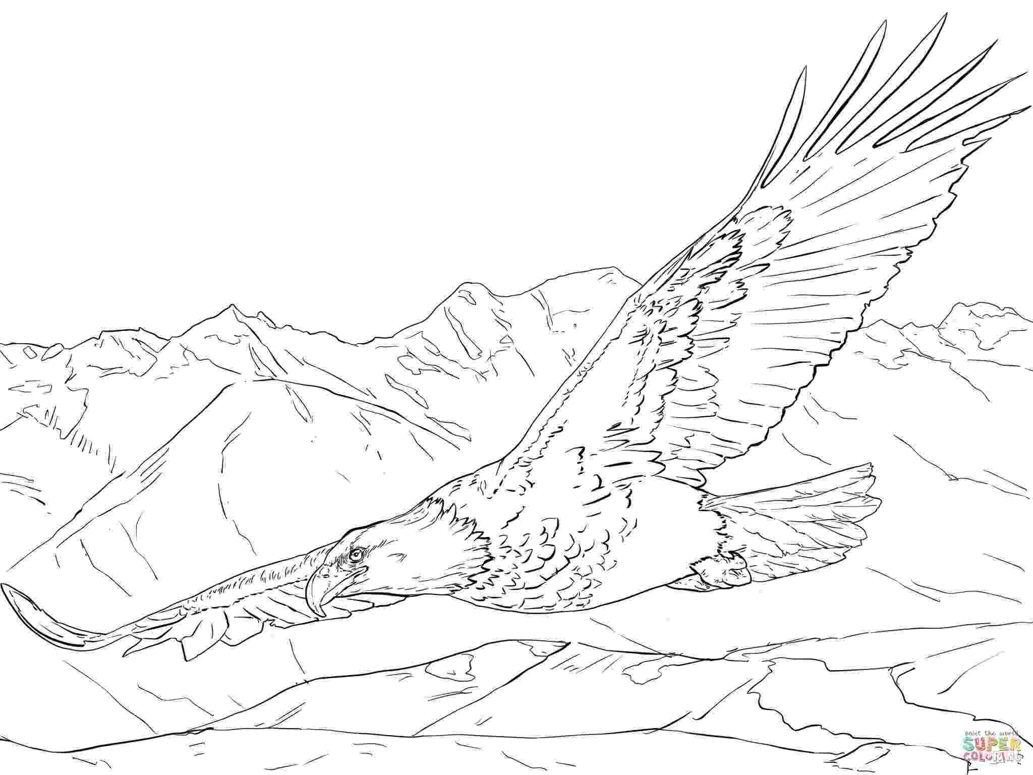 bald eagle pictures to color free printable bald eagle coloring pages for kids bald color eagle pictures to